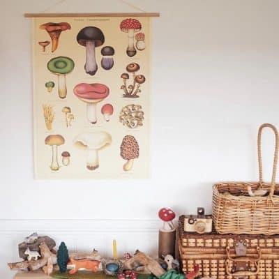 Vintage Mushroom Poster / Educational poster / Mushrooms