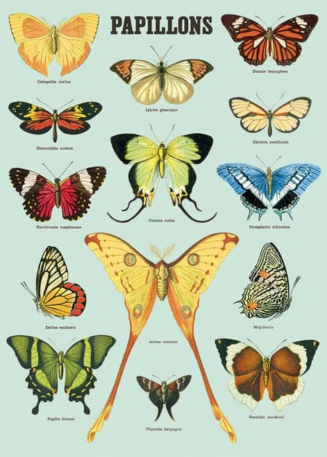 butterfly or papillons Poster