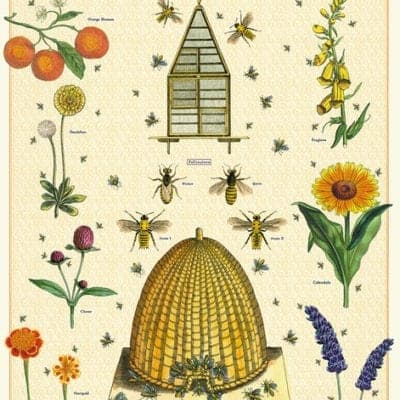 bees and honey poster