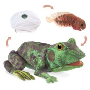 Frog Lifecycle Puppet Folkmanis